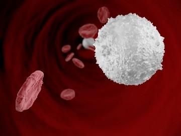 Норма лейкоцитов в крови у детей 1 года, 5 лет и 7 лет