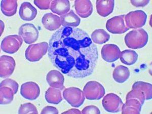 Анализ крови моно