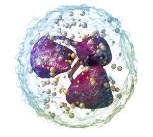 Увеличение нейтрофилов в крови у ребенка