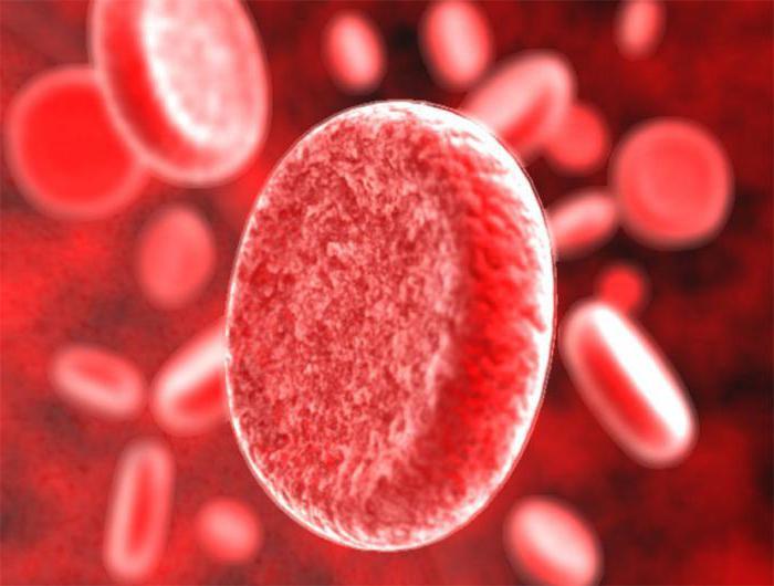 Белки в крови человека