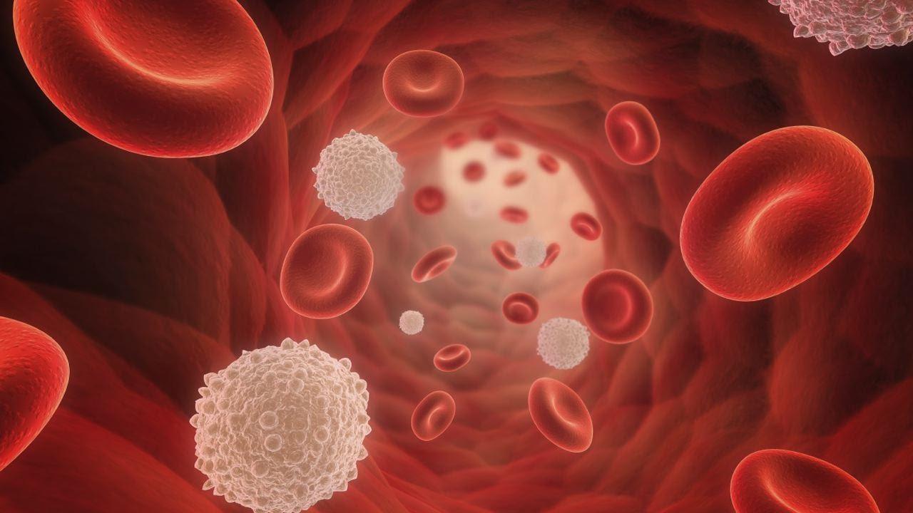 Увеличенное количество тромбоцитов в крови у взрослых