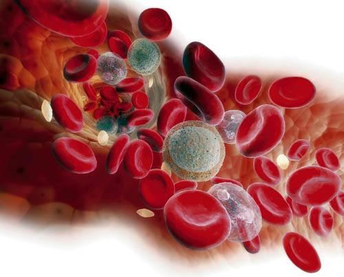 Амилаза в крови норма и отклонение от нормы