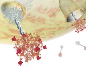 Анализ крови на онкомаркеры са 199