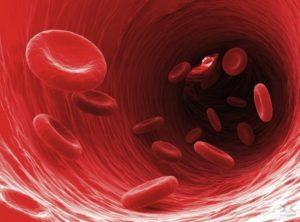 Лейкоциты в моче: общий анализ, анализ по Нечипоренко. Повышенные лейкоциты в моче