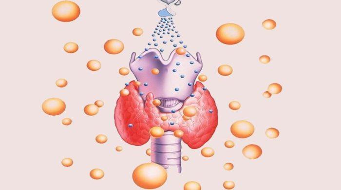 Расшифровать анализ крови на гормоны щитовидной железы онлайн